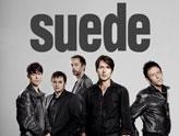 Concert Suede